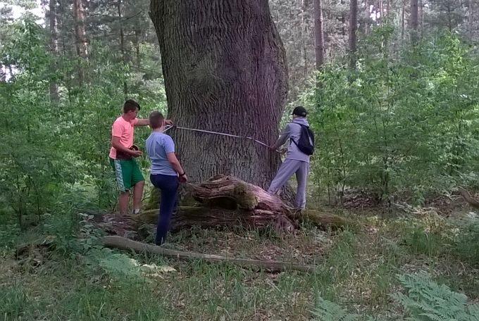 Oglądasz obraz z artykułu: Lekcja w lesie